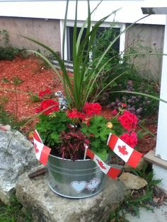 Canada day flowers