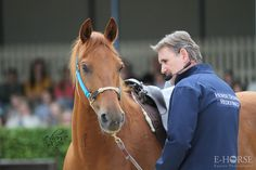 Horse Event Ermelo (Nederland) - demo Chris Irwin  || Foto door E-horse paardenfotografie - www.e-horse.be