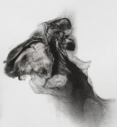 ink and graphite drawings by artist Patti Jordan
