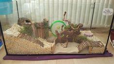 Hamster Life, Baby Hamster, Hamster House, Hamster Stuff, Hamster Natural Habitat, Hamster Habitat, Cool Hamster Cages, Gerbil Cages, Diy Guinea Pig Cage