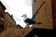 Glasgow City Centre, Animals, Animales, Animaux, Animal, Animais