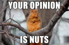 My gift to you Imgur. A new meme: Disagreeing Squirrel