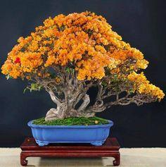 Bonsai/ Bonsai Perfection. For available artificial bonsai go to https://www.fauxtreesnshrubs.com/product-category/trees/bonsai/