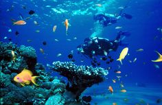 Eilat, Israel: Scuba Diving in the Red Sea