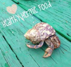 Forget buying toxic hermit crab food at the pet store, feeding your crabs a healthy and well-balanced diet is really easy! This instructable contains 4 easy ways ...