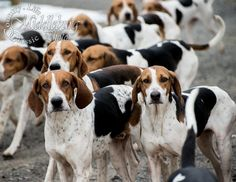 Fox Hounds. So cute! Would love one of these