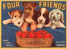 Four Friends Dog Basket Tomato Canary Islands Crate Label Vintage Poster Repro Images Vintage, Vintage Dog, Vintage Pictures, Vintage Stuff, Vintage Travel, Vintage Metal, Vintage Labels, Vintage Posters, Vintage Ephemera