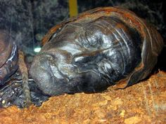 """Tollund Man - Iron Age """"bog person"""" preserved for over 2,300 years in the peat bogs of Tollund, Denmark. It is thought he was hanged as part of a ritual sacrifice, possibly to appease the fertility gods."""