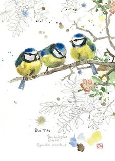 Blue Tits by Jane Crowther. Design for Bug Art greeting cards.