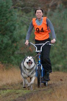 Bikejoring is an activity where the owner bikes along with their #dog while they are attached to their bike through a harness which keeps both the dog and owner safe. The dog or team of dogs can be attached to a towline to also pull the biker.  #bikejoring #husky