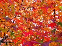El #otoño empieza el próximo martes 23 de septiembre. ¿Preparados para recibir la nueva #estación? ¡Nosotros, sí!