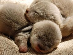 cute baby otters :) @Wendy Hart