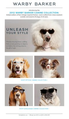 Warbybarker.com glasses also for your pet newsletter ideas. Ecommerce newsletter email marketing inspiration #email #design #newsletter #emaildesign #newsletterdesign #inspiration