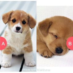Which ones cuter Click here to vote @ http://getwishboneapp.com/share/9375587