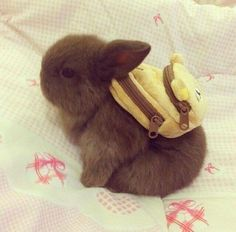 Time to go to bunneh school. I got my backpack and pencil box. #bunny