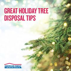 The holidays are a joyous time spent with friends and family! But once the new year comes, it's time to get your home back to normal. Make a hassle-free plan to remove your tree with these handy tips: Christmas Tree Quotes, Live Christmas Trees, Christmas Tree Background, Holiday Tree, Christmas And New Year, Christmas Tree Decorations, Christmas Lights, Christmas Holidays, Merry Christmas