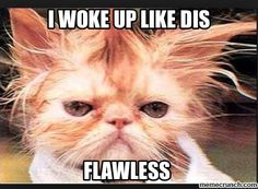 Flawless, bruh. #cats #animals #meme #memes #funny