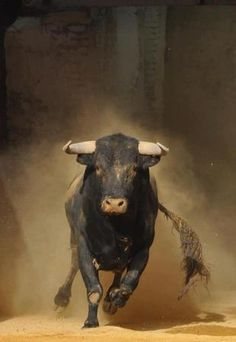 Taurus - Mess with the Bull, and U will receive the Horns. Farm Animals, Animals And Pets, Cute Animals, Wild Animals, Beautiful Creatures, Animals Beautiful, Charging Bull, Bull Riding, Mundo Animal