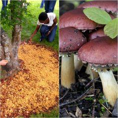 Make a wood chip mushroom garden