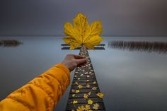 Autumn is a second spring when every leaf is a flower — at Lough Derg. Ireland