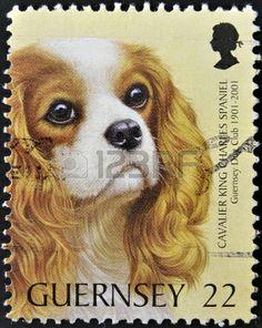GUERNSEY - CIRCA 2001: A stamp printed in Guernsey shows a dog,cavalier king charles spaniel, circa 2001  Stock Photo - 15463890