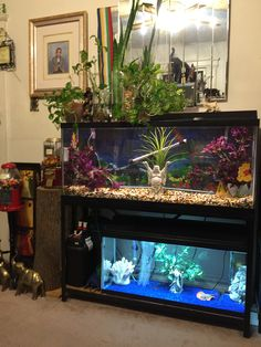68 best aquarium bliss images on pinterest in 2019 fish tanks rh pinterest com
