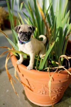 I Am King Of This Pot