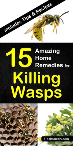 15 home remedies for killing wasps - with detailed tips on how to keep yellow jackets away from your home and repel wasps from nests using a natural remedies and plants. The perfect way to get rid of them using spray, paper bags or other diy methods. Get Rid Of Wasps, Bees And Wasps, Natural Home Remedies, Herbal Remedies, Cold Remedies, Health Remedies, Killing Wasps, Getting Rid Of Bees, How To Kill Bees