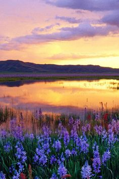 USA, Idaho, Camas Prairie, wild flowers by marsh, sunset by Steve Bly on Getty Images Gif Disney, All Nature, Nature Wallpaper, Sunrise Wallpaper, Belle Photo, Idaho, Beautiful Landscapes, Wonders Of The World, Wild Flowers