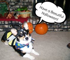 Corgi Comics: October Roundup and Outtakes