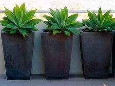 Creative Container and Plant Combinations