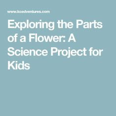 Exploring the Parts of a Flower: A Science Project for Kids