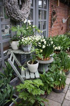 Gartengestaltung - Gartenplanung - Gartenberatung für naturnahe Gärten Balcony Garden, Indoor Garden, Garden Art, Outdoor Gardens, Garden Design, Growing Vegetables, Growing Plants, Hydrangea Care, Real Plants