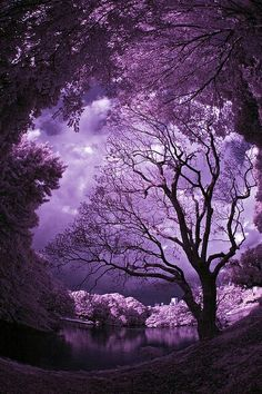 Mother Nature is the best artist. Simply beautiful- I'm in purple heaven~
