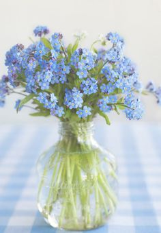Forget-Me-Nots on powder blue and white gingham ... The definition of Everyday Country!