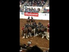 This is scary, but amazing: Budweiser Clydesdale hitch accident. How terrifying to have that much horse power go crashing from one trip-up, but man! Those horses are AWESOME. They didn't flip out but stayed calm & down for those that were down, until their handlers got everything under control. That, my friends, is a well worked horse.