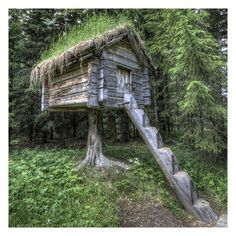 A Tree house.  Doesn't it kind of remind you Baba Yaga's house?