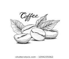 Coffee beans with leaves and handwritten lettering. Drink coffee banner hand dra… Coffee beans with leaves and handwritten lettering. Line art label over retro background Coffee Barista, Coffee Logo, Coffee Poster, Coffee Cafe, Coffee Shop, Drink Coffee, Coffee Truck, Starbucks Coffee, Coffee Doodle