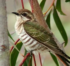 Fotografía tomada en Capertee Valley, NSW, Australia