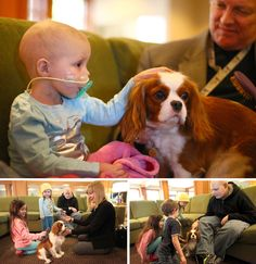 Angel visiting children at the Ronald McDonald House in Seattle.  This is why we call Cavaliers love bugs. :-)