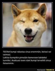 TESTAA kumpi rakastaa ... Husky, Beautiful Pictures, Lol, Words, Memes, Animals, Smile, Humor, Animales