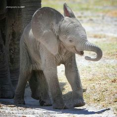 how it is possible to be so cute . Elephant Family, Elephant Love, Elephant Art, African Elephant, African Animals, Elephant Gifts, Elephant Images, Elephant Pictures, Animal Pictures