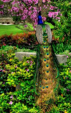 Doesn't this remind you of a Queen with her trailing vestment? Go Peacock Watching at the Los Angeles Country Arboretum Pretty Birds, Beautiful Birds, Animals Beautiful, Nature Animals, Animals And Pets, Cute Animals, Exotic Birds, Colorful Birds, Peacock Pictures