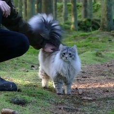 Cute kittens are fun Cute Funny Animals, Cute Baby Animals, Animals And Pets, Cute Kittens, I Love Cats, Crazy Cats, Beautiful Cats, Animals Beautiful, Norwegian Forest Cat