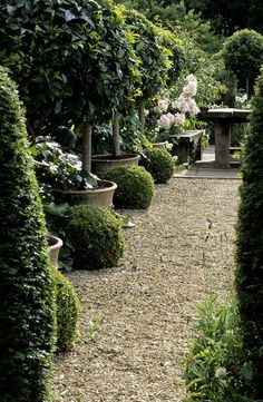 Love the layering of the greenery, small shrub, medium shrub, and potted tree.