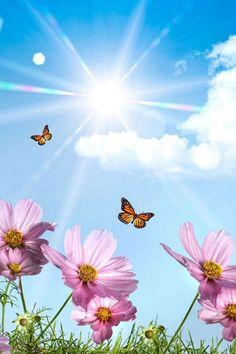 Sunshine Pink