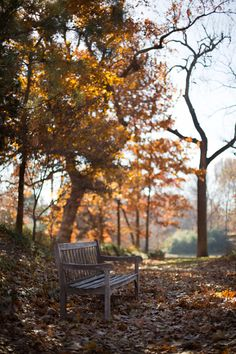 www.renataconephotography.com  fall - autumn - beautiful leaves