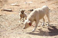 """""""O Grito do Bicho"""": Projeto determina que animais encontrados nas ruas..."""
