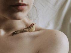 Bird nesting in collar bones
