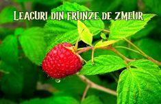 Strawberry, Fruit, Garden, Plant, Garten, Lawn And Garden, Strawberry Fruit, Gardens, Gardening